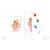 Mini Passbildmappe mit Einsteckschlitz für 4,5x6 cm - Motivdruck Hände Produktbild Front View 2XS